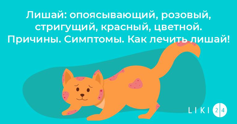 Лишай: опоясывающий, розовый, стригущий, красный, цветной. Причины. Симптомы. Как лечить лишай